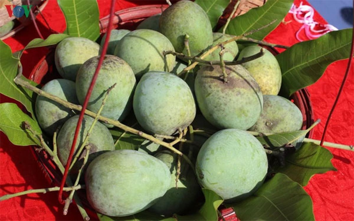 Xoài tròn Yên Châu hiện là giống xoài bản địa duy nhất của miền Bắc Việt Nam có tên trong danh mục của Tổ chức FAO cần được bảo vệ, giữ gìn và phát triển.