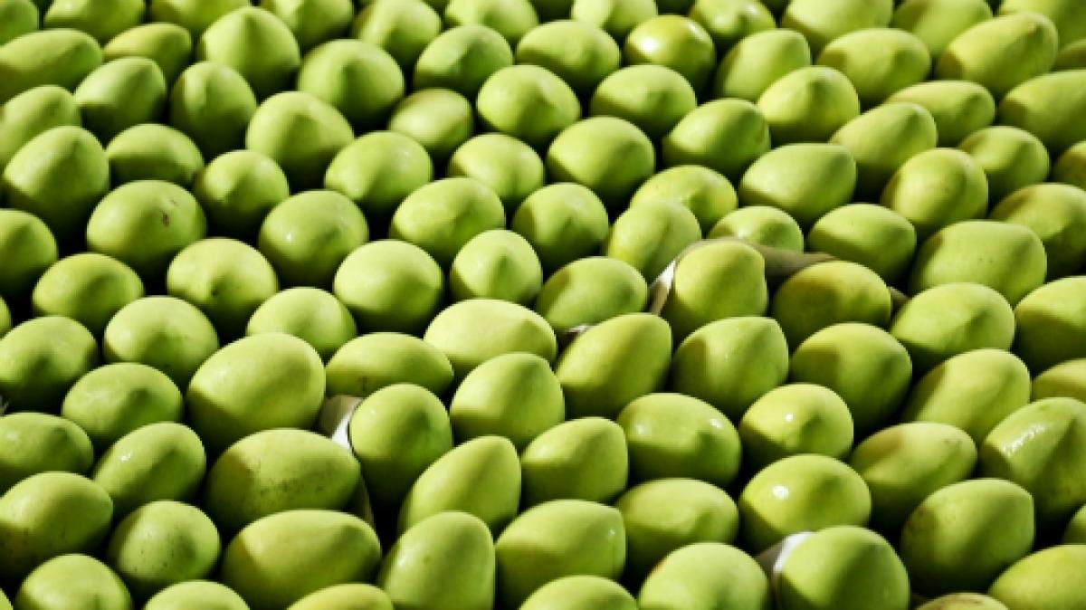 Trung Quốc tạm dừng nhập khẩu xoài Việt Nam do mạo danh mã số vùng trồng. (Ảnh minh họa: KT)