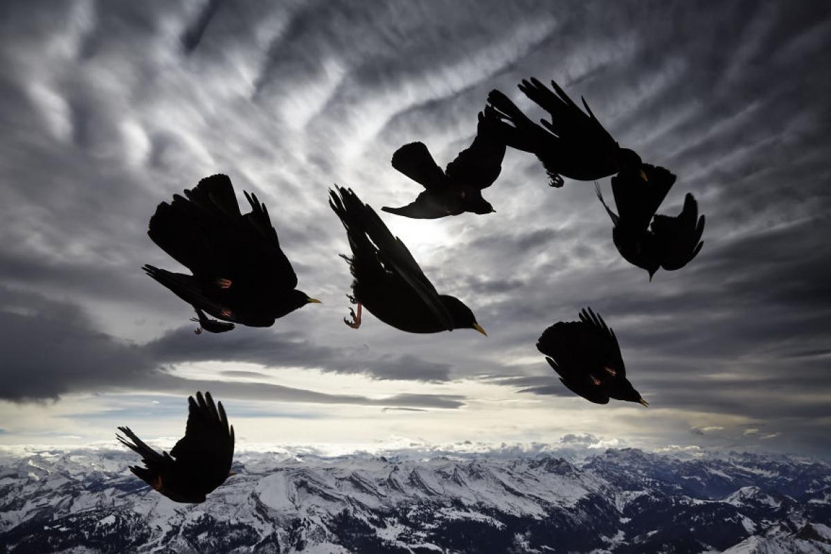 Cánh chim trong gió.