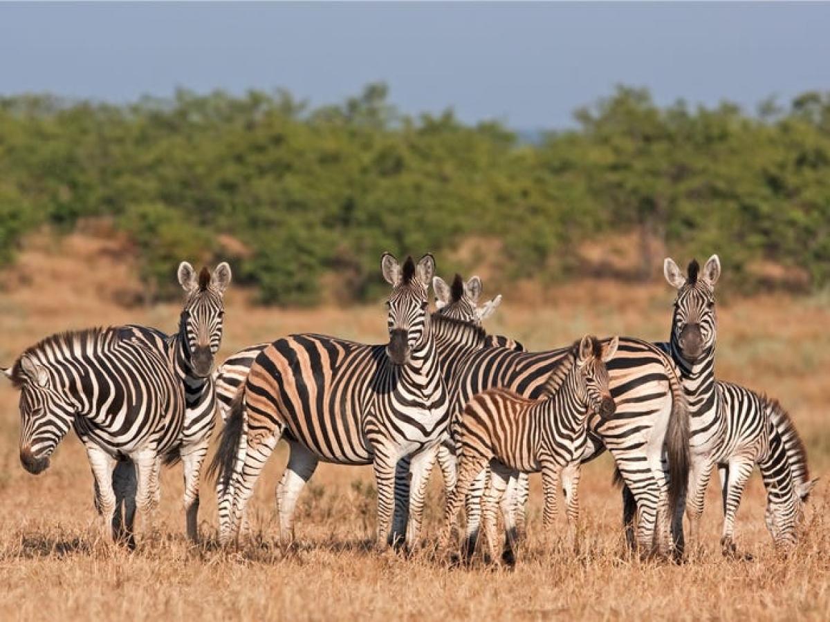Nam Phi.