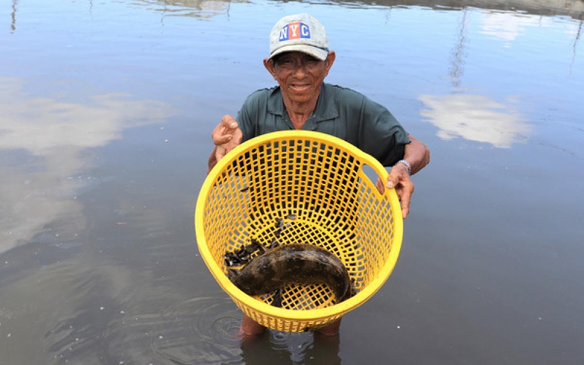 Nuôi cá đặc sản, đếm con tính tiền lãi. Mô hình nuôi cá mú mang lại hiệu quả kinh tế cao cho gia đình ông Phạm Văn Hai ở huyện Long Điền, tỉnh Bà Rịa - Vũng Tàu. (Ảnh: VietnamNet)