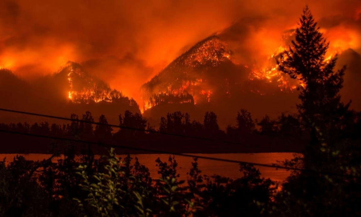 Hiện trường một vụ cháy rừng tại Mỹ. Ảnh: Reuters