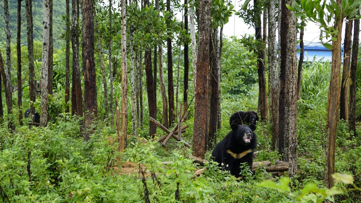 Cơ sở Bảo tồn gấu Ninh Bình xây dựng môi trường sống bán hoang dã cho gấu. Ảnh: FOUR PAWS Việt.
