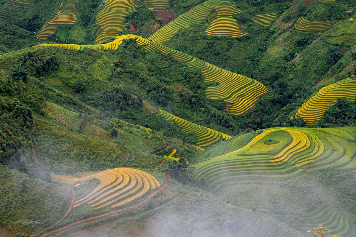 Đến Mù Cang Chải mùa này, du khách có dịp chiêm ngưỡng những đồng lúa chín vàng uốn lượn quanh co, tạo nên một cảnh đẹp không ở nơi đâu có.