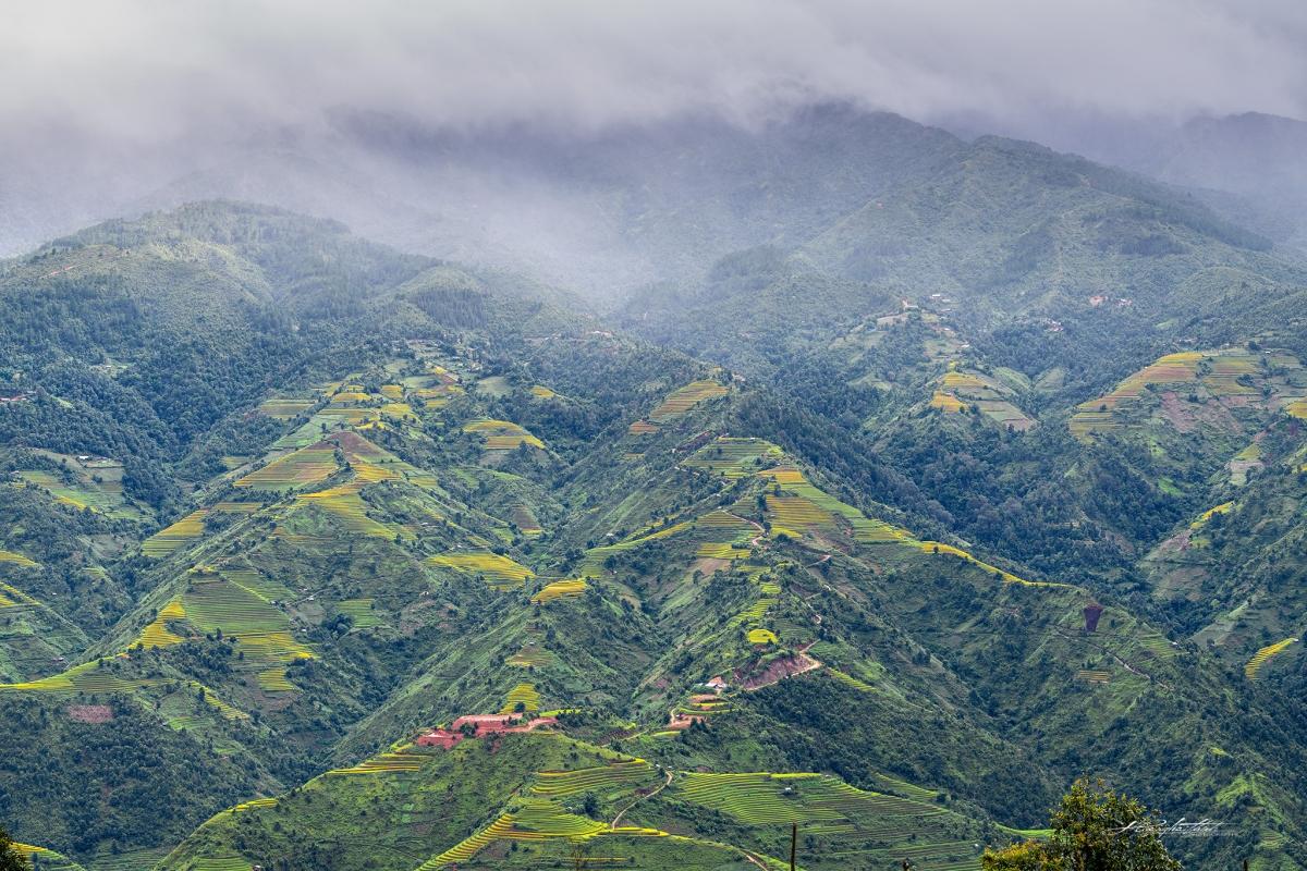 Những thửa ruộng bậc thang uốn lượn trải dài trên vùng đất Mù Cang Chải tạo nên khung cảnh đẹp say đắm du khách gần xa.