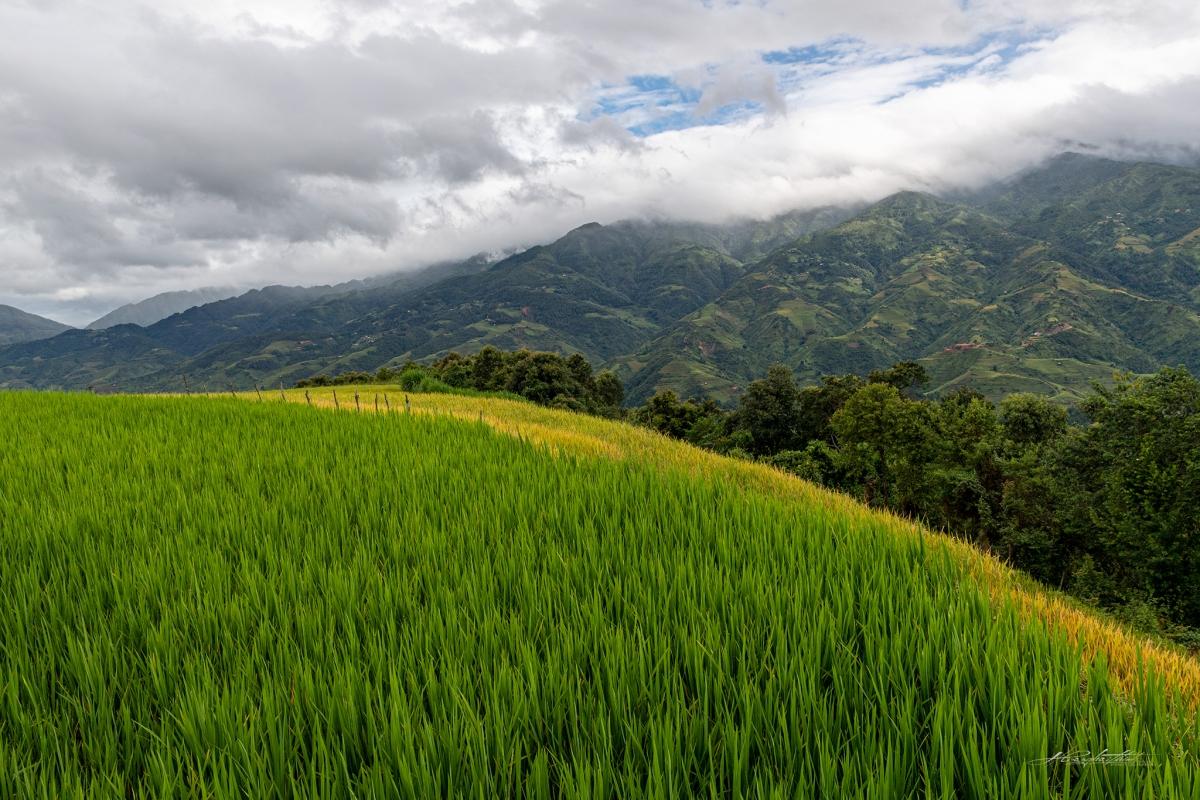 Mù Căng Chải là một huyện vùng cao thuộc tỉnh Yên Bái, phía Bắc giáp huyện Văn Bàn, phía Nam giáp huyện Mường La, phía Tây giáp huyện Than Uyên và phía Đông giáp huyện Văn Chấn.