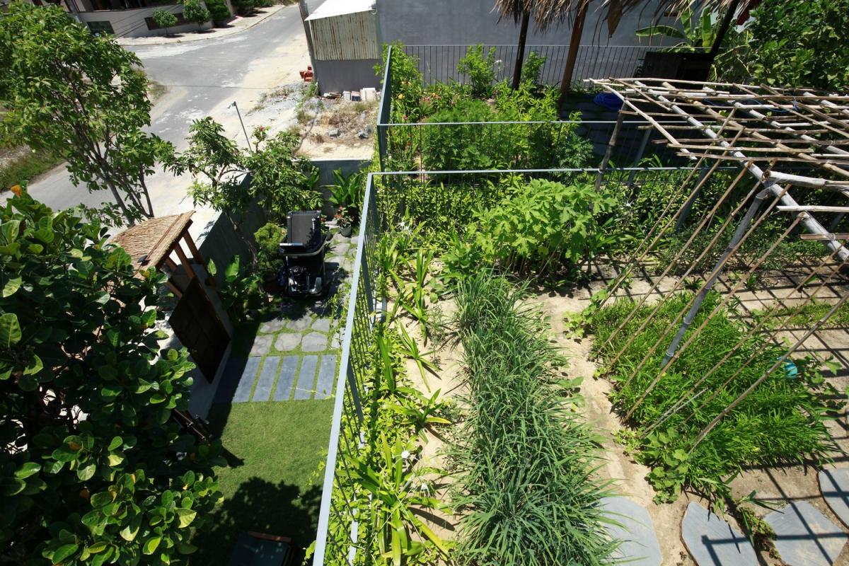 Vốn có niềm đam mê với trồng trọt, chủ nhà dành đến 70% tổng diện tích đất để trồng rau, các loại cây ăn trái, hoa và lối đi.