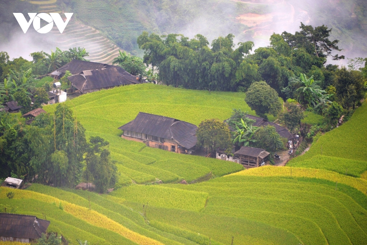 Within Hoang Su Phi district, Phung hamlet is an unmissable destination for tourists.