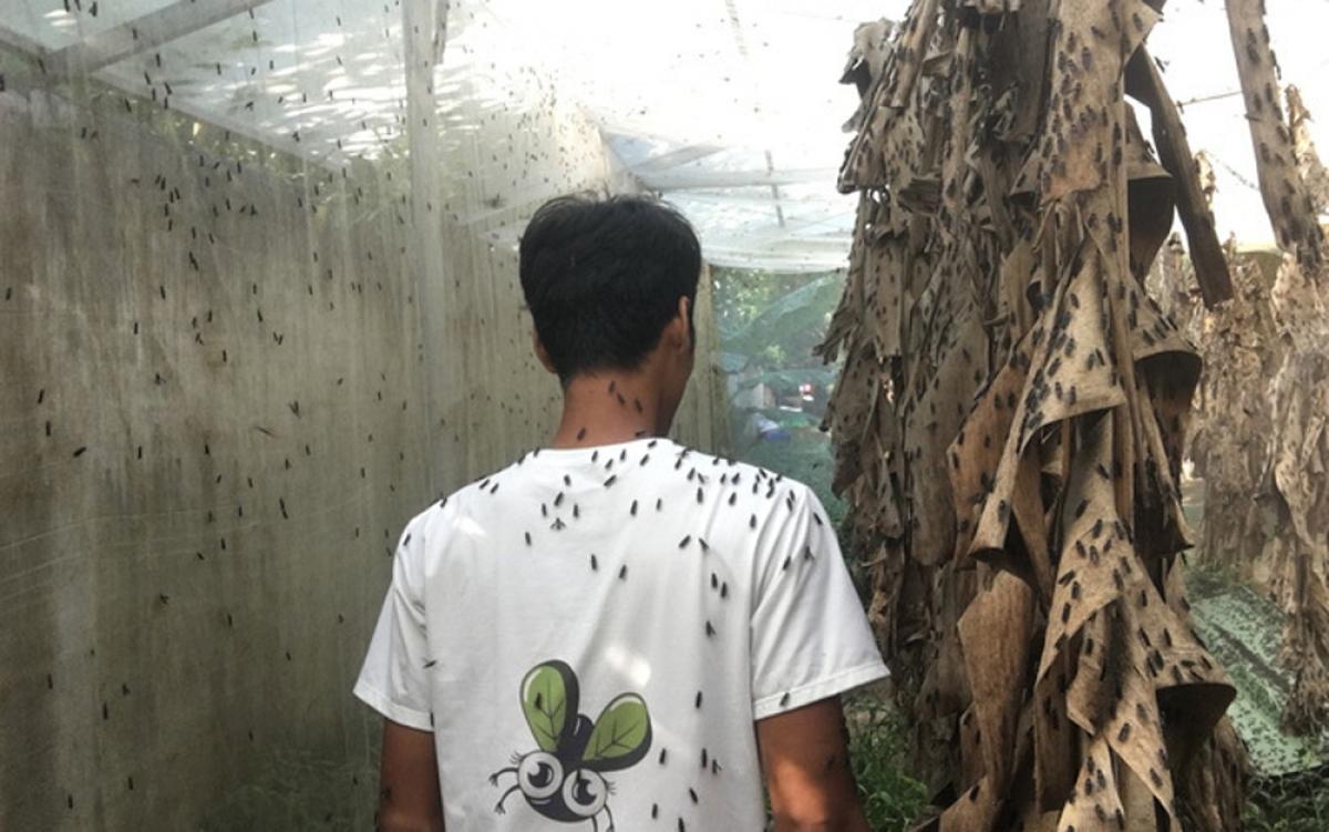 Nuôi ruồi trong rừng, chàng kỹ sư quê ở Bến Tre thu hàng trăm triệu đồng/tháng. (Ảnh: VietnamNet)