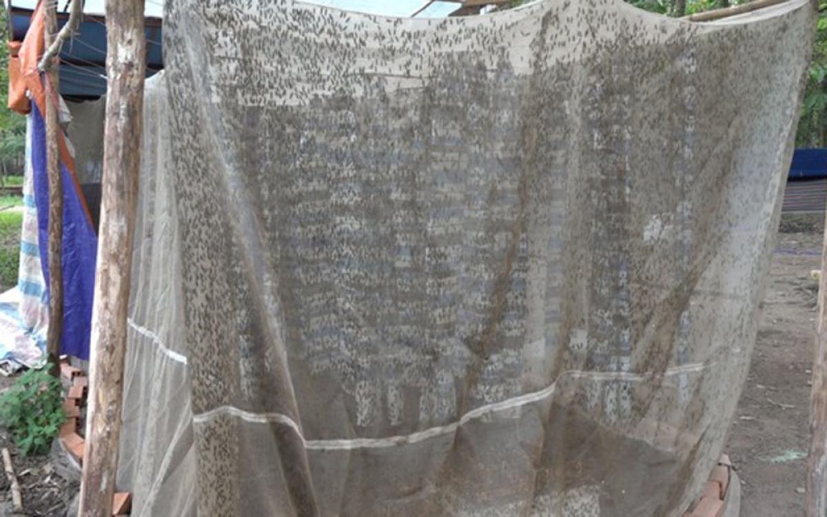 Chàng kỹ sư quê ở Quảng Ngãi cũng đã quyết định bỏ việc và khởi nghiệp bằng nghề nuôi ruồi lính đen. Giờ đây anh đang là chủ trang trại nuôi ruồi tại huyện Củ Chi, TP.HCM. (Ảnh: Thanh Niên)