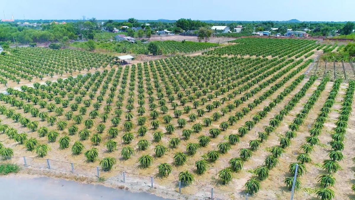 Bà Rịa -Vũng Tàu hướng đến mục tiêu phát triển du lịch phải gắn với sản phẩm nông nghiệp