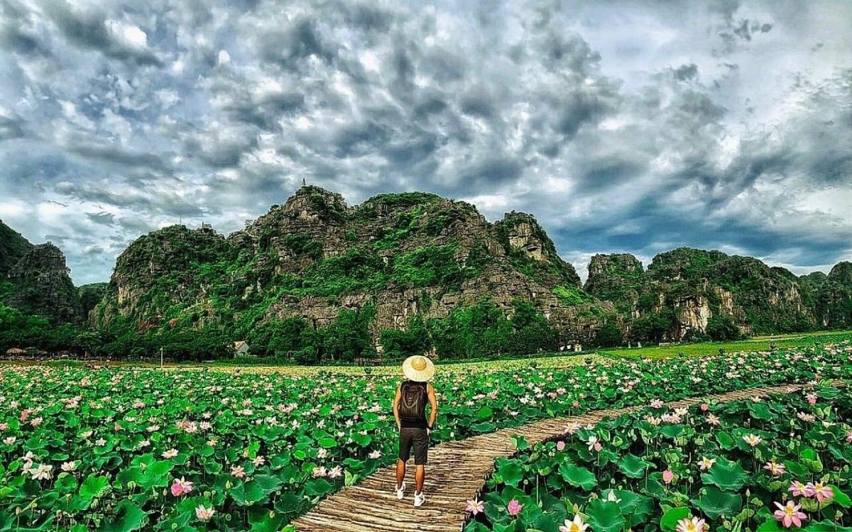 Theo chia sẻ của người quản lý, sen ở hồ sen Hang Múa là giống sen Nhật có thể nở quanh năm chứ không chỉ nở tập trung vào mùa hè như các giống sen khác.