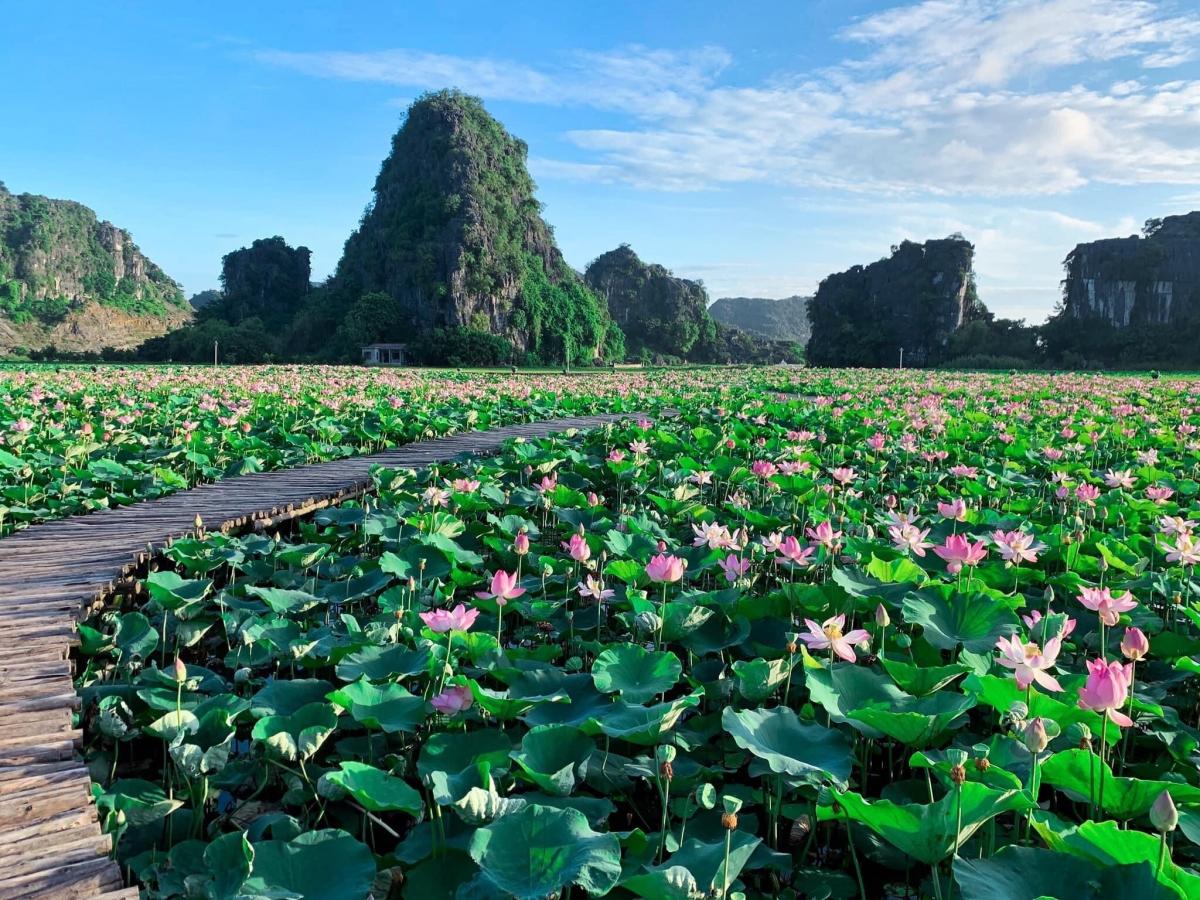 Xuất hiện từ năm ngoái, hồ sen với con đường gỗ hình trái tim dưới chân núi Ngọa Long ở Hang Múa đã gây sốt trên cộng đồng mạng, trở thành một trong những địa điểm checkin được giới trẻ yêu thích nhất.