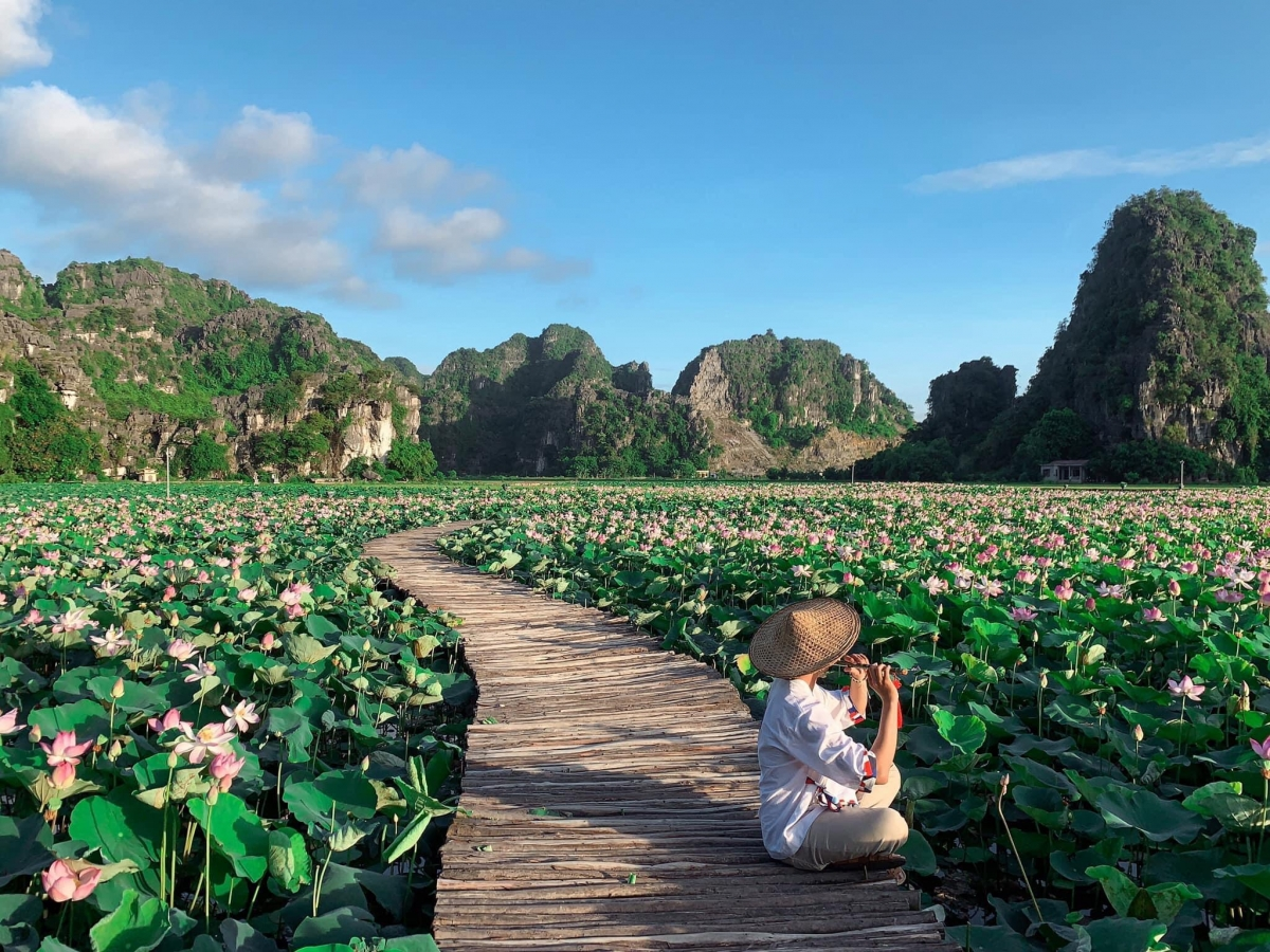 Hình ảnh về hồ sen đang gây sốt vốn là địa điểm nổi tiếng thời gian qua, đây cũng chính là hồ sen từng được mệnh danh kỳ lạ nhất Việt Nam khi vẫn nở hoa vào mùa đông năm ngoái.