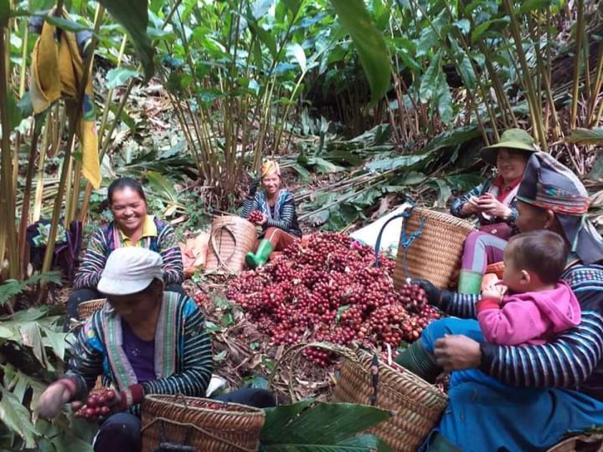 Mô hình trồng thảo quả cho thu lãi cả trăm triệu đồng mỗi năm, giúp bà con yên tâm lao động sản xuất, xóa đói, giảm nghèo.