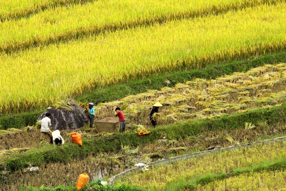 Lai Châu phấn đấu đến năm 2030 trở thành tỉnh phát triển khá trong khu vực miền núi phía Bắc, tỉnh đã quy hoạch 2 vùng phát triển kinh tế động lực, lấy sản xuất nông nghiệp hàng hóa tập trung làm mũi nhọn.