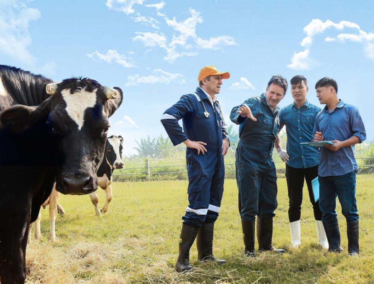 Chú thích: Chuyên gia của FrieslandCampina và nông dân Hà Lan giàu kinh nghiệm hỗ trợ về kỹ thuật và chia sẻ kinh nghiệm để giúp các nông hộ tại Việt Nam và các nước khác có thể khai thác tối đa tiềm năng của ngành chăn nuôi bò sữa.
