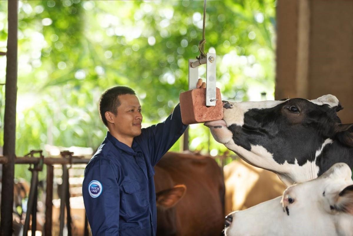 Người nông dân Cô Gái Hà Lan luôn dành cho đàn bò sự quan tâm, chăm sóc đặc biệt để bò luôn có trạng thái sức khỏe tốt, mang đến nguồn sữa nguyên liệu chất lượng cao.