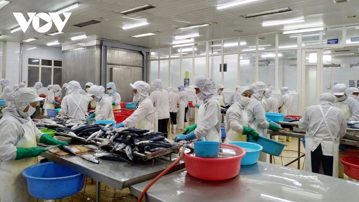 Local businesses are required to meet stringent food safety standards set by the EU market and combat the IUU fishing following the EC's recommedations