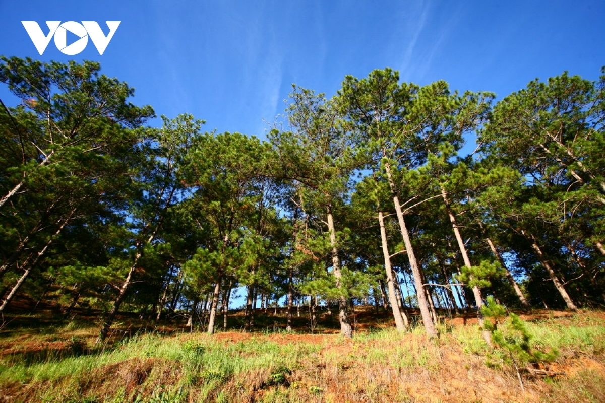 The city is surrounded by an epic pine tree forest that remains cool throughout the entire year and serves to create a beautiful and peaceful landscape.