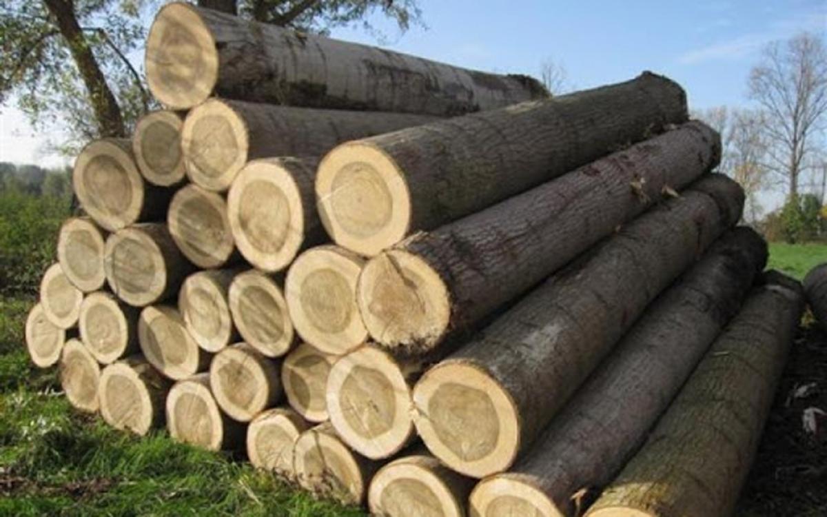 Kiểm soát tính hợp pháp của nguồn gỗ nguyên liệu là yếu tố sống còn của ngành gỗ Việt. (Ảnh minh họa: KT)