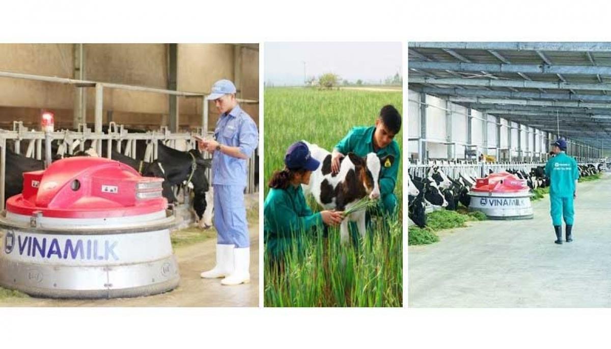 Hiện đang sở hữu 13 trang trại trong và ngoài nước theo chuẩn quốc tế, Vinamilk hiện đang là nơi đào tạo và làm việc của nhiều chuyên gia trong ngành chăn nuôi bò sữa.