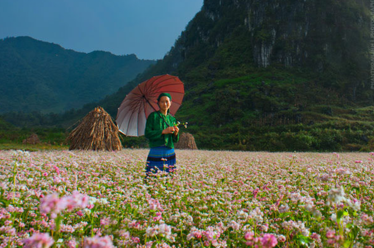 Seeing the beautiful buckwheat flower fields at dawn is a site not to be missed. (Photo: Cao Anh Tuan)