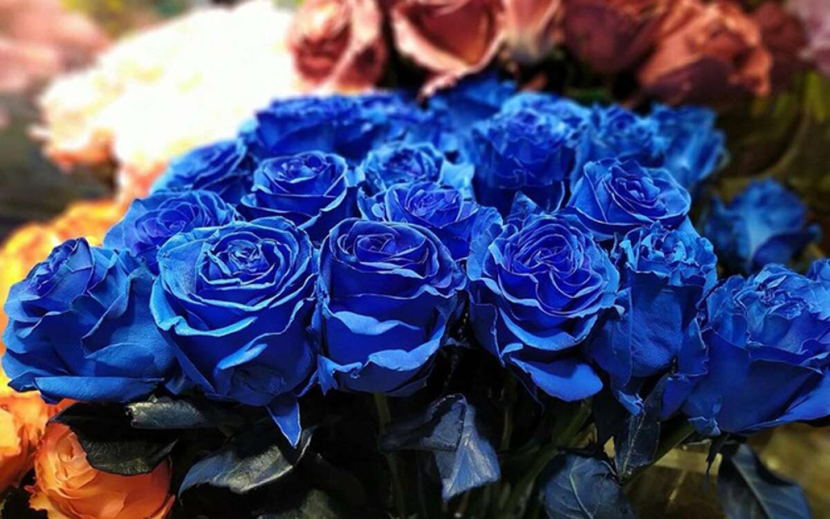 Người tiêu dùng vẫn tiếp tục chọn lựa các loại hoa nhập khẩu độc lạ, kích thước lớn như mẫu đơn Nhật hay banksia, hoa hồng xanh, hoa nhuộm nhiều màu. (Ảnh: Zing)