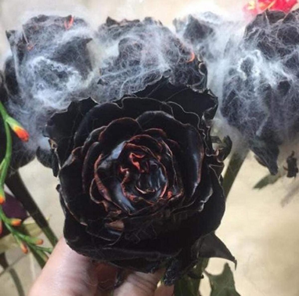 Hồng phủ sô-cô-la đen khoảng 500.000 đồng/bông, mỗi bó 10 bông dao động từ 5 – 10 triệu/bó. (Ảnh: Dân Việt)