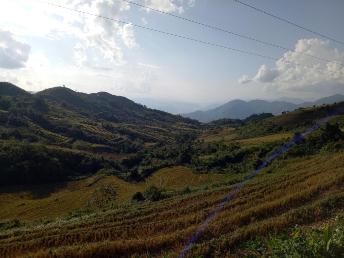 Những thửa ruộng trơ gốc rạ mang sau thu hoạch