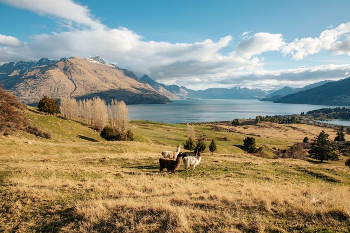 Tầm nhìn toàn cảnh hướng ra hồ nước và dãy núi The Remarkables