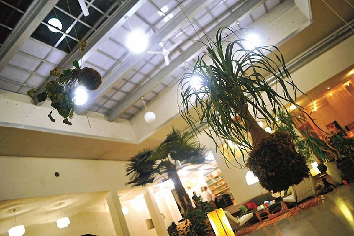 Trong nhà có rất nhiều cây xanh. Cây được trồng với phong cách độc đáo như những tác phẩm nghệ thuật sắp đặt dưới hệ thống mái bằng kính đóng mở tự động.