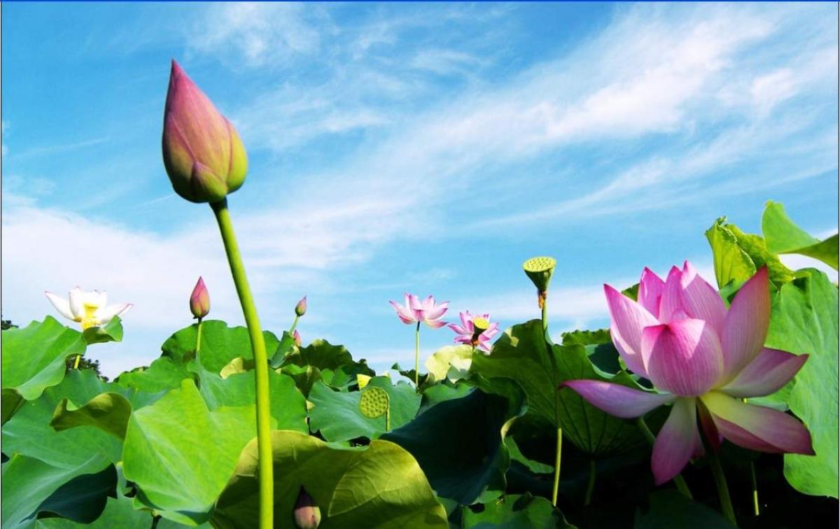 Hãy sống như những đóa hoa tỏa hương cho đời, không làm vẩn đục cuộc sống (Ảnh minh họa internet)