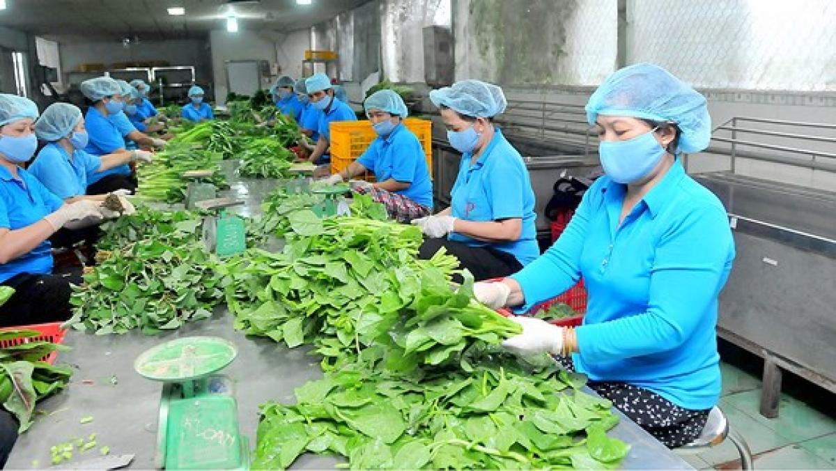 Hiện nay cả nước có trên 17.000 hợp tác xã nông nghiệp với 3,78 triệu thành viên. (Ảnh minh họa: KT)