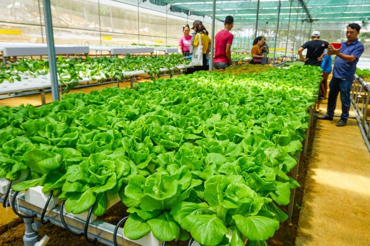 Du khách tìm hiểu vườn rau tại trang trại nông nghiệp BB Farm. Ảnh: Sở VHTT&DL Phú Yên