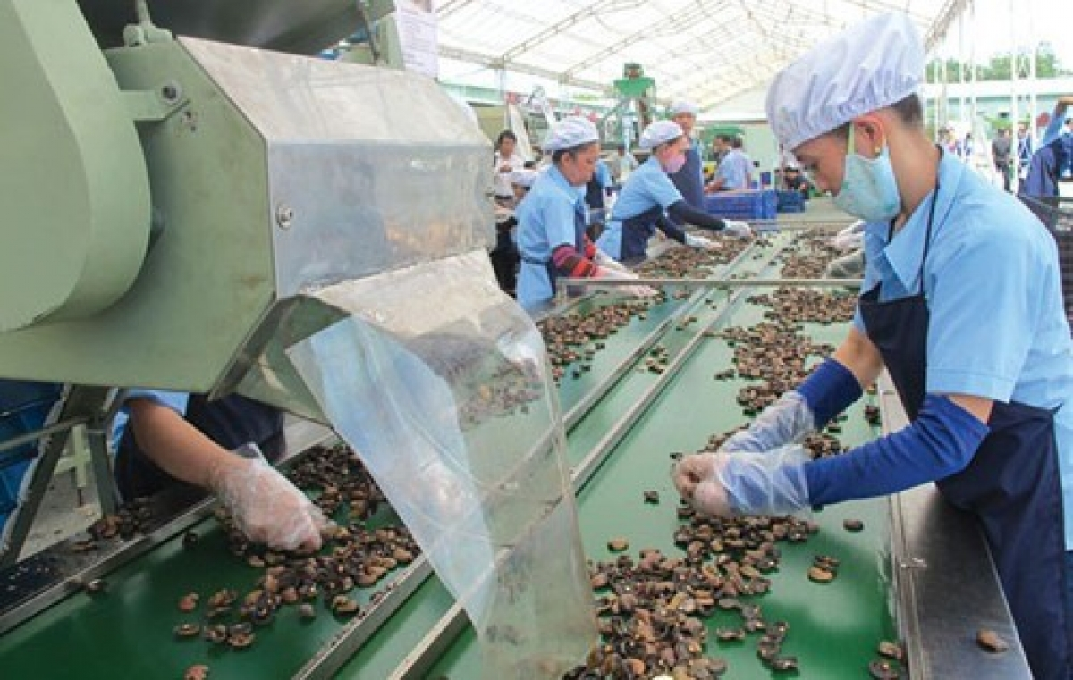 A cashew processing line for export (Photo: vinacas.vn)