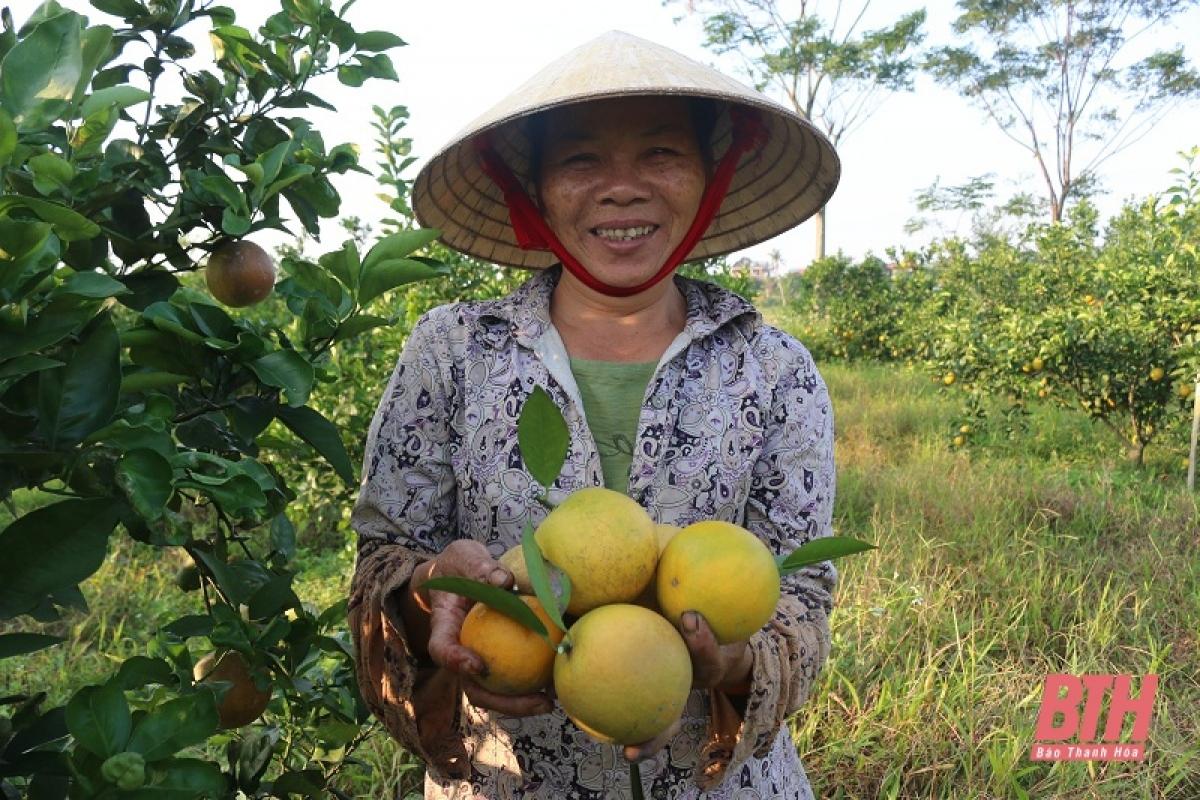 Theo nhiều chủ vườn tại Đông Minh chia sẻ,trồng cam không vất vả bằng trồng lúa lại cho thu hoạch kinh tế cao hơn. Mỗi vụ, thu hoạch cam trong khoảng 4 tháng, bắt đầu từ cuối tháng 8 đến tháng 12 hàng năm.