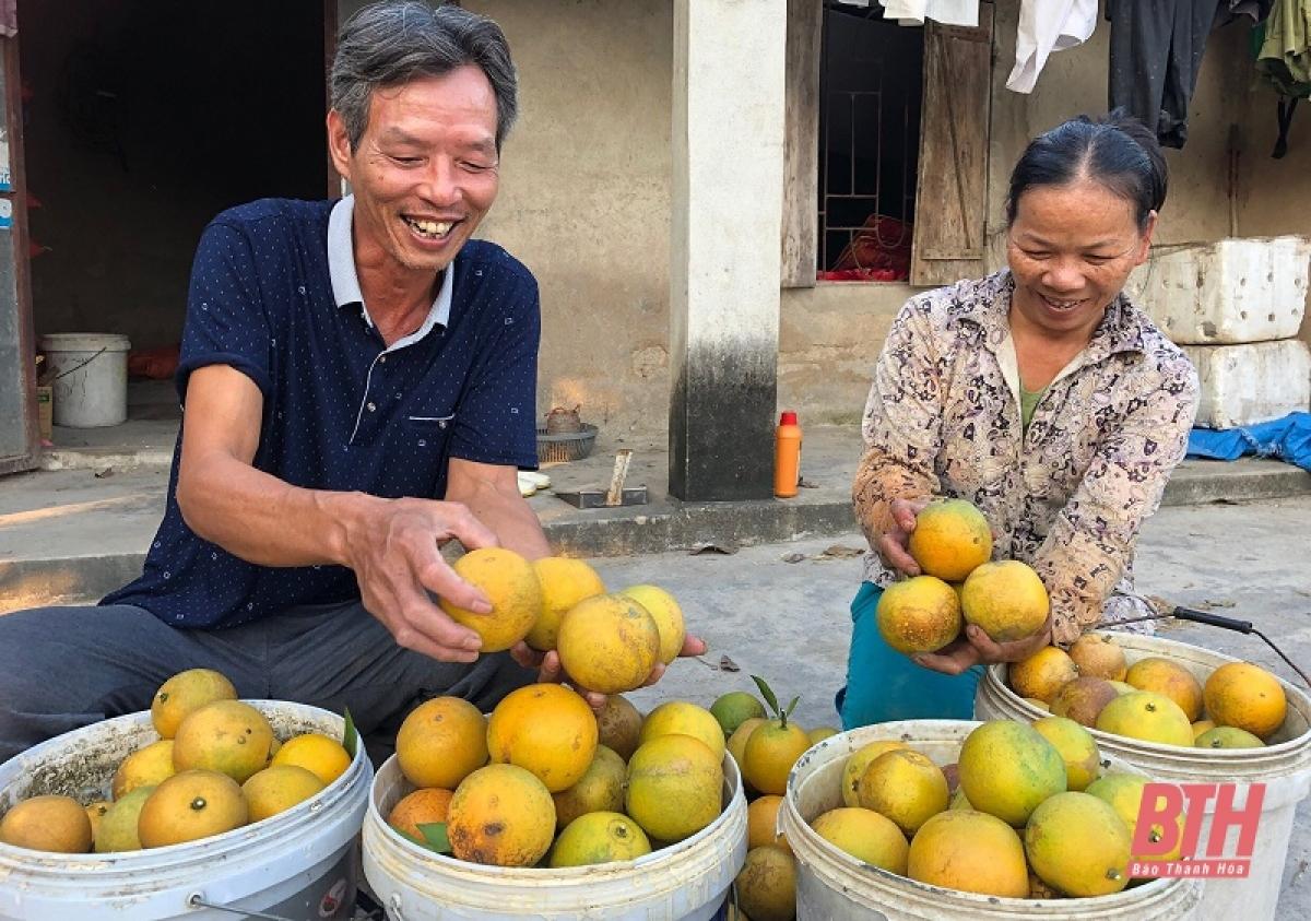 Tuy nhiên, theo lãnh đạo xã Đông Quang cho biết, mô hình trồng cam tuy không mới nhưng để phát triển bền vững đòi hỏi người làm vườn phải nắm chắc kỹ thuật để cây cam cho năng suất cao, đảm bảo chất lượng. Bên cạnh đó, người dân cũng cần nhạy bén nắm bắt, tìm kiếm thị trường để giúp sản phẩm làm ra có đầu ra ổn định.
