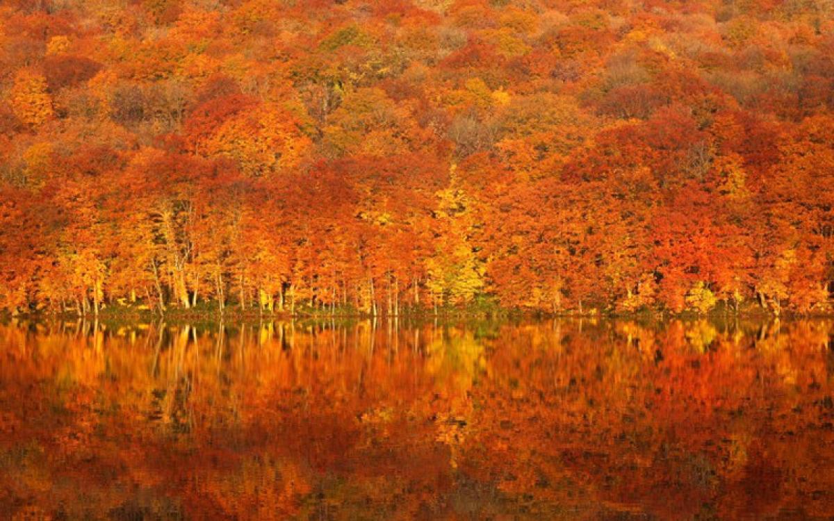 Tuyệt sắc thu ấn tượng ở hồ Tsutanuma trong thời gian ngắn từ cuối tháng 9 đến tháng 10 hàng năm (Ảnh: amori.com)