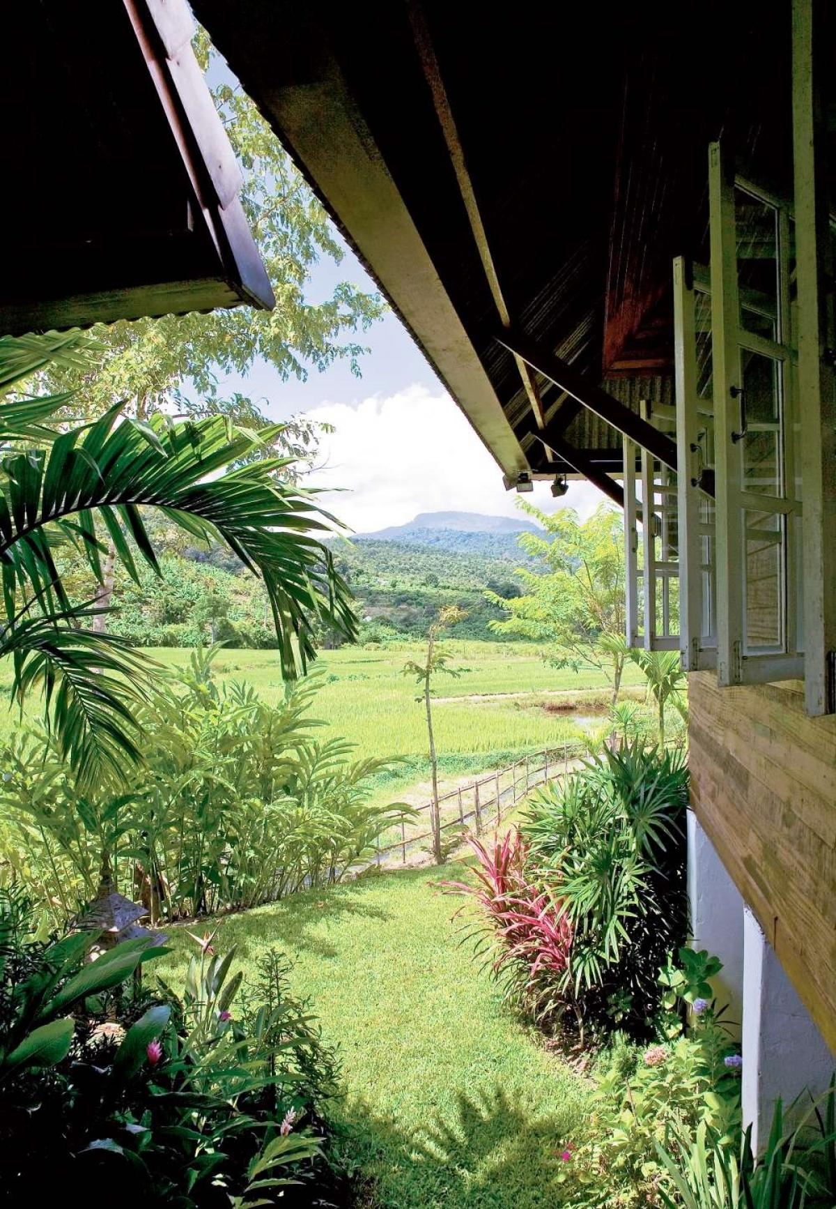 3. Ngôi nhà mơ ước giữa rừng và cánh đồng lúa: Ngôi nhà tọa lạc trên một vị trí đắc địa có tầm nhìn ra cánh đồng lúa xanh ngút tầm mắt, hai bên là khu rừng gỗ tếch.