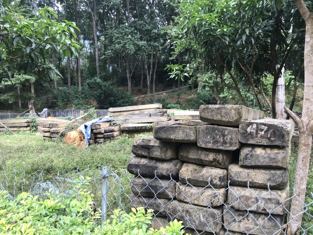 Trong đó chủ yếu là gỗ Pơ Mu một trong những loại gỗ quý hiếm.