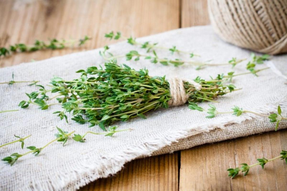 Cỏ xạ hương: Không chỉ được sử dụng phổ biến trong ẩm thực mà cỏ xạ hương còn được biết đến với tính kháng sinh mạnh mẽ. Cỏ xạ hương thậm chí còn có thể giúp thức ăn giữ được lâu hơn. Tinh dầu cỏ xạ hương có thể tiêu diệt khuẩn E.coli, khuẩn cầu tụ và một số loại nấm.