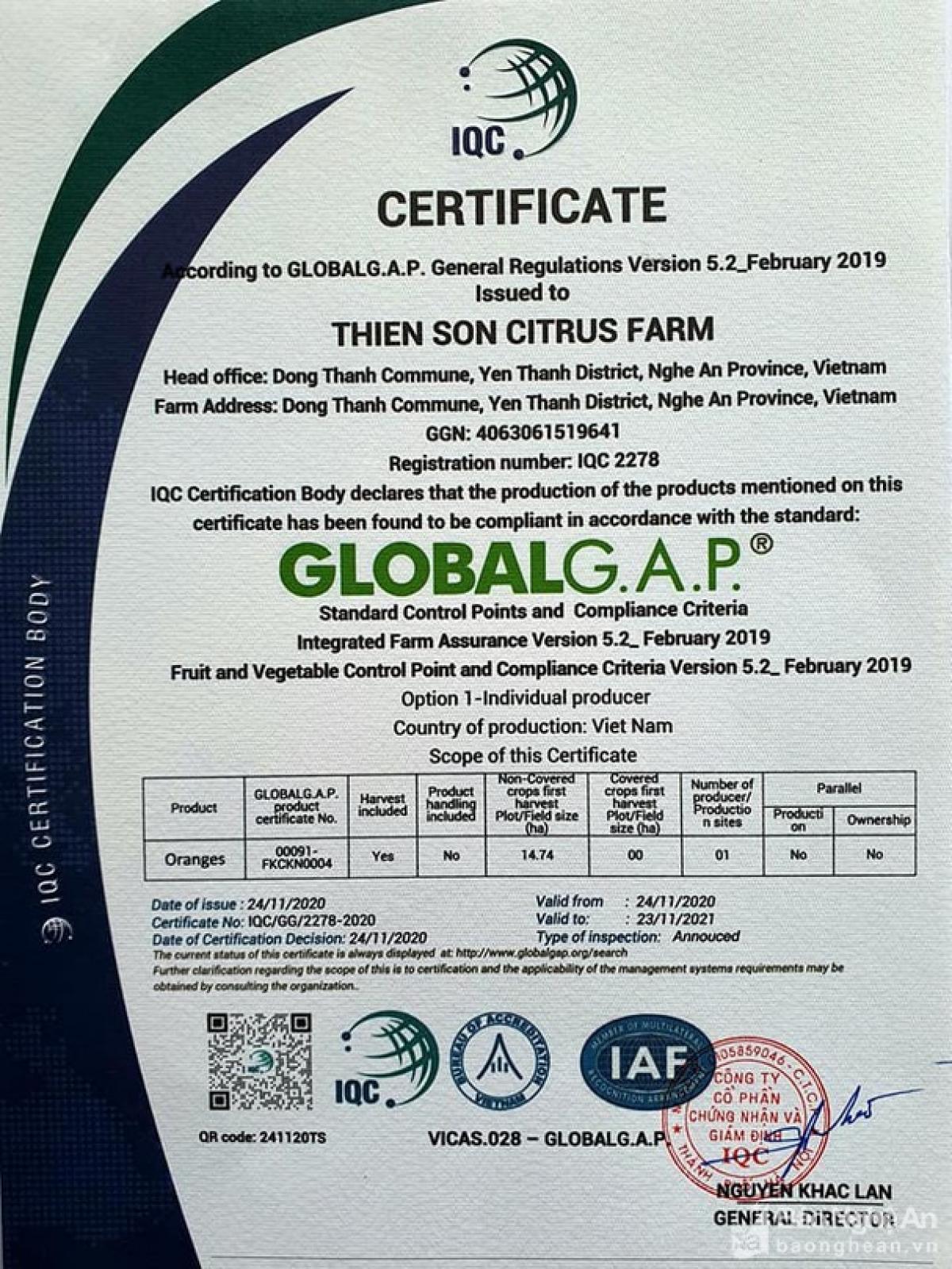 Trang trại cam Thiên Sơn đạt chứng chỉ GLOBALGAP. (Ảnh: Xuân Giáo)