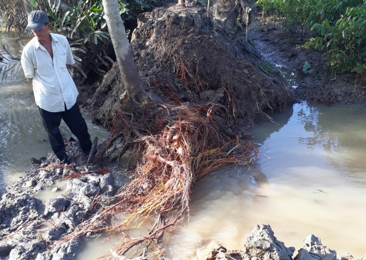 Triều cường làm vỡ đê tại xã Tân Thiềng, huyện Chợ Lách.