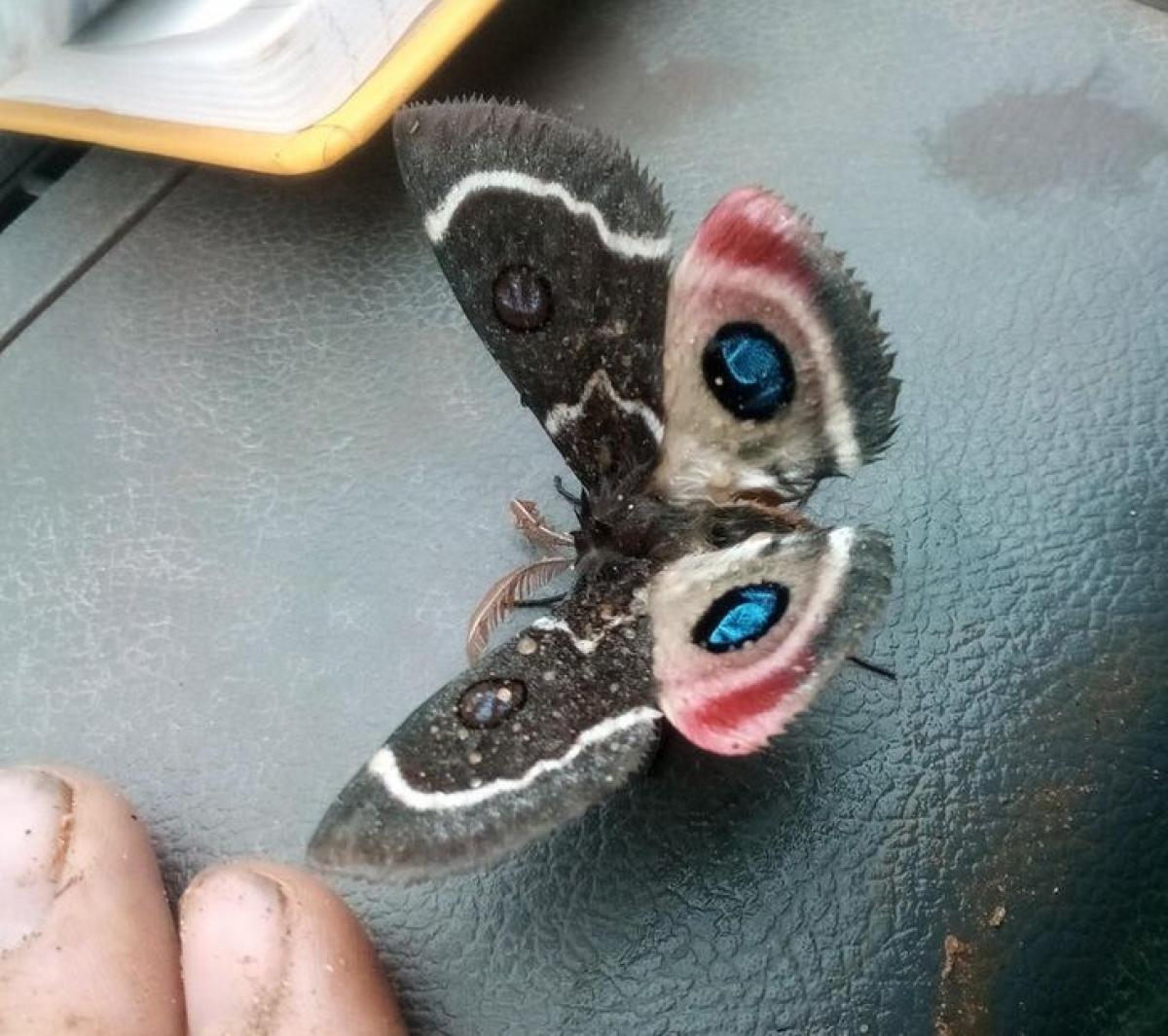 Cánh bướm với màu sắc kỳ lạ đến khó tin.