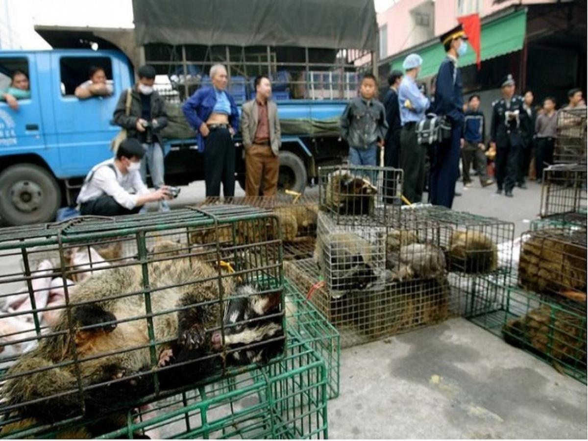 Một chợ buôn bán động vật hoang dã tại tỉnh Quảng Châu, Trung Quốc. Ảnh: SCMP.
