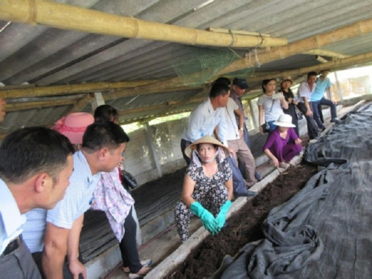 Bên cạnh đó, những bã thải sau khi được giun sử dụng hết chất mùn chúng lại được tận dụng trở thành giá thể tốt cho chăn nuôi và trồng trọt.