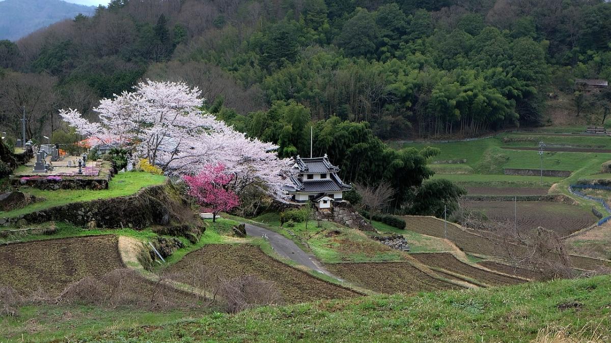 Nhiều người trẻ Nhật Bản bắt đầu tìm về các vùng nông thôn sinh sống và làm việc. Ảnh: Yabai.com
