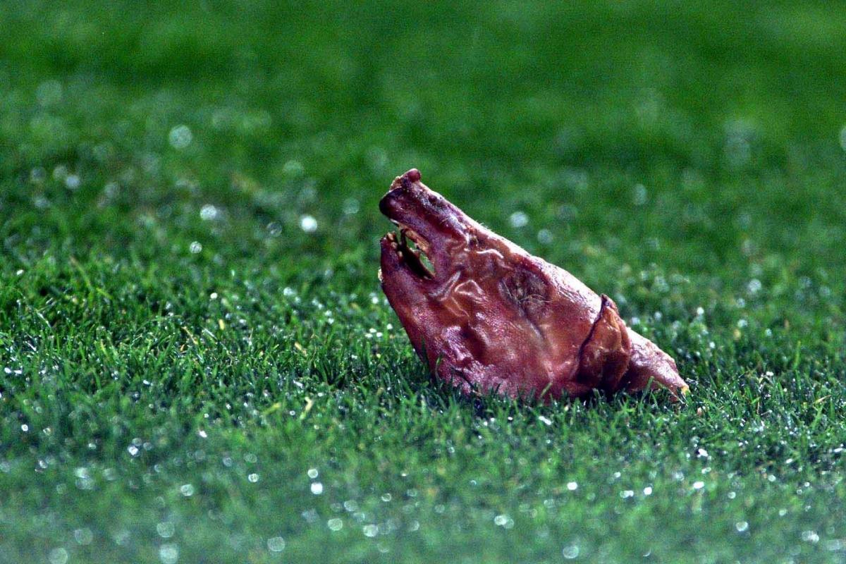 Hình ảnh chiếc đầu lợn được ném xuống sân Camp Nou năm 2002 để phản đối Figo. (Ảnh: Getty).