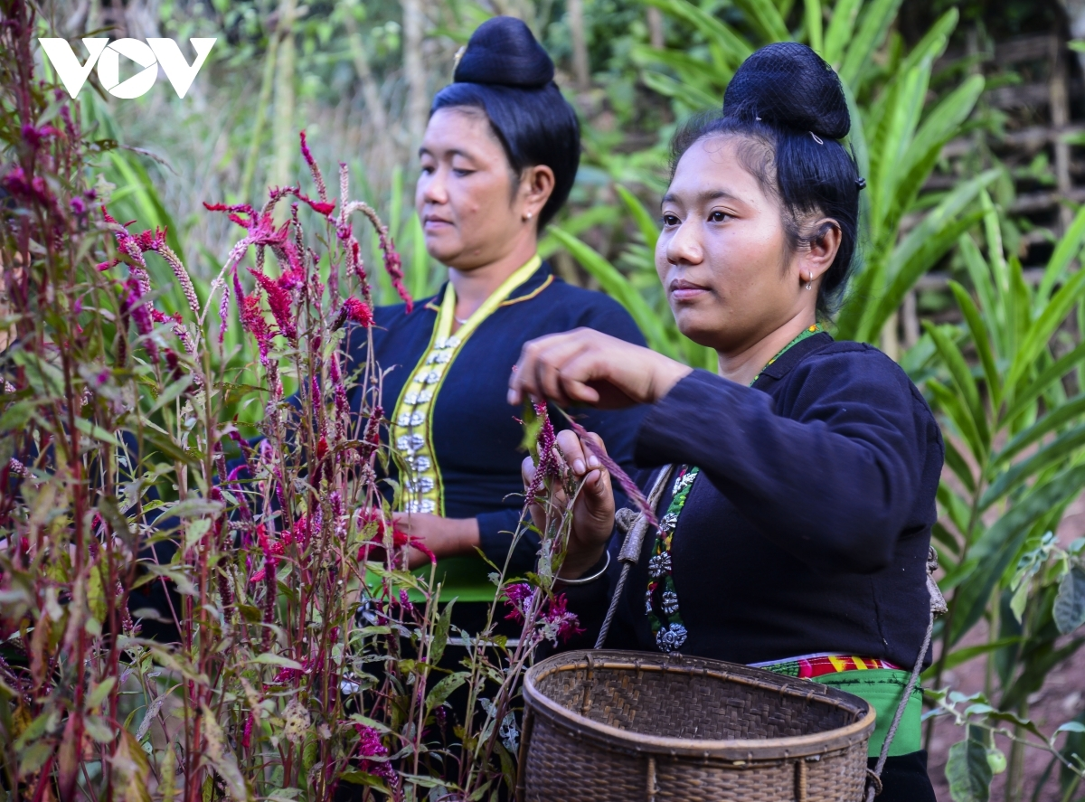 After rituals are completed, each household's owner travels to the nearby fields to pick cockscomb flowers to decorate their homes as a way of wishing luck upon their new crop.